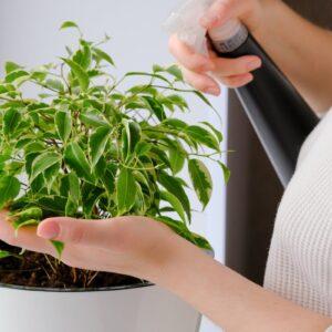 Защита и уход за растениями
